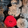 Stoned roses — Stock Photo