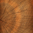 Tree cut texture background — Stock Photo