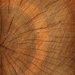 Royalty-Free Stock Photo: Tree cut texture background