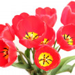 Bouquet of red tulips isolated on white background — Stock Photo #9712703