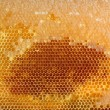 Yellow honeycomb full of honey - Stock Photo