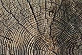 Pine wooden texture — Stock Photo