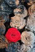 Stoned roses — Stock Photo