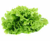 Lettuce salad isolated — Stock Photo