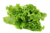 Salad lettuce — Stock Photo