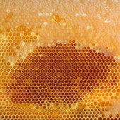 Yellow honeycomb full of honey — Foto Stock