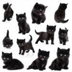 Black little kitten, collection — Stock Photo #9414485
