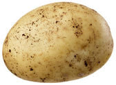 A small potato — Stock Photo