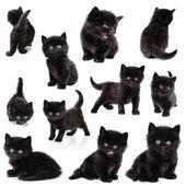 Black little kitten, collection — Stock Photo
