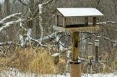 Birdfeeder — Foto Stock