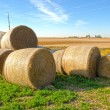 Stock Photo: Bails of Hay