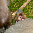 Baby Monkey — Stock Photo