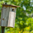 Royalty-Free Stock Photo: Wooden Bird House
