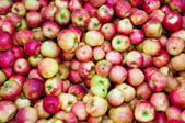 Tons of Apples — Stock Photo