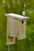 Bird on a Bird house — Stock Photo