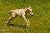 Running Horse — Stock Photo