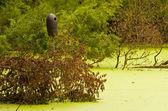 Bird House in the Swamp — Stock Photo
