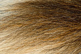 Animal Fur — Stock Photo