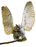 Owl isolated with its wings up — Stock Photo