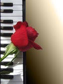 Rose lying on the piano keys — Stock Photo