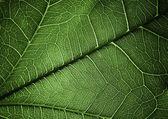 Plant texture — Stock Photo