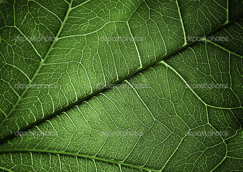 Plant texture background for different uses — Stock Photo #9551537
