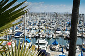 Boats at anchor at Dana Point Harbor #5 — Stock Photo