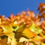 Autumn Leaves — Stock Photo #9454454