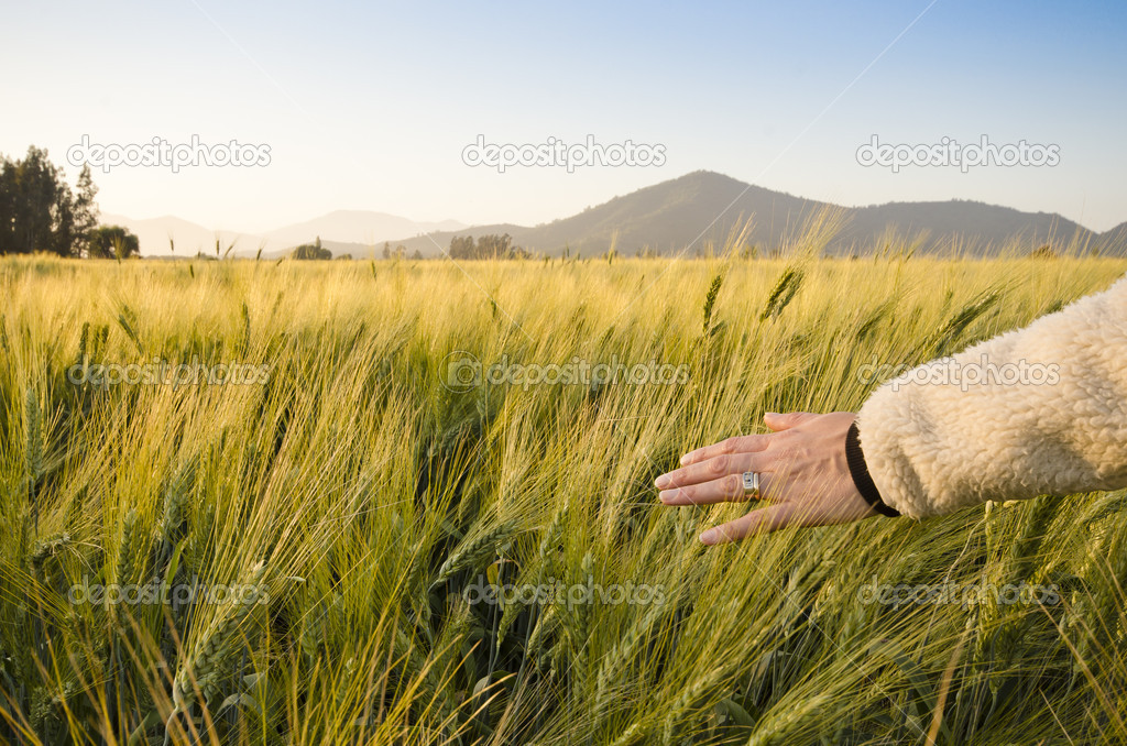 Woman feeling peaceful and dragging her hand across the field — Stock Photo #9858701