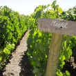 Merlot sign in the vineyard - Stock Photo