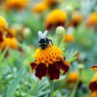 Bee sitting on the bright colors — Stock Photo #10249925