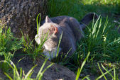 The cat plays in nature — Stock Photo