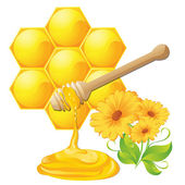Honey dipper with bee honeycomb isolated and flowers — Stock Vector