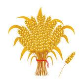 Wheat ears of corn, a sheaf of wheat — Stock Vector