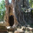 Royalty-Free Stock Photo: Angkor wat tree