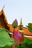 Lotus at Wat Phra Kaew — Stock Photo