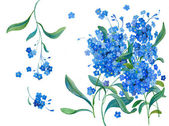Blue forget-me-not — Stock Photo