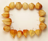 Frame of Physalis — Stock Photo