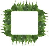 Quadro de folha de figueira — Foto Stock