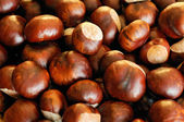 Horse chestnuts — Stock Photo