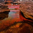 Cano Cristales, The Seven Colored River — Stock Photo