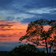 Dusk with the Silhouette of a Tree — Stock Photo #9658109
