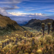 ColombiParamo with EspeletiPlants — Stock Photo #9658426