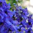Stock Photo: Delphinium and bee