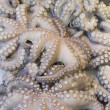 Fresh octopuses prepared to sell at the market - Stock Photo