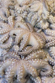 Fresh octopuses prepared to sell at the market — Stock Photo