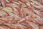 Fresh red mullet for sale on fish market — 图库照片