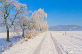 Countryside road through winter field surrounded by snowy trees — Stock Photo
