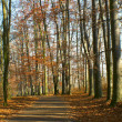 Path in woods in autumn — Stok Fotoğraf #9422368