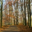 Stockfoto: Path in woods in autumn